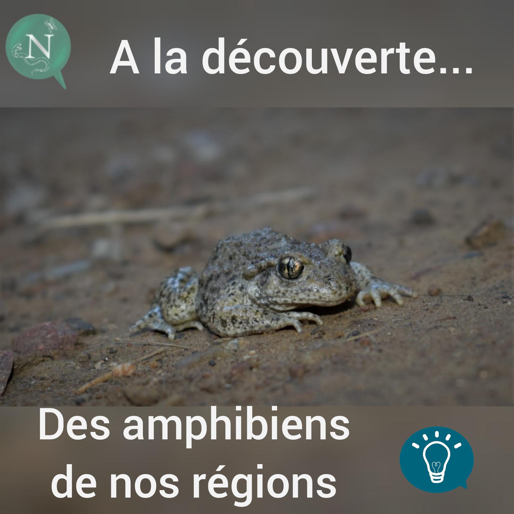 À la découverte…                     … Des plus beaux amphibiens de chez nous!