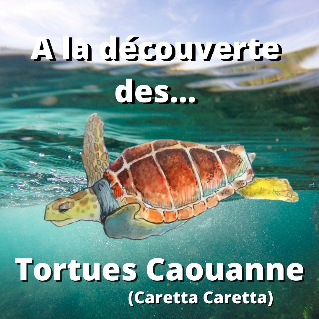 A la découverte des… Tortues Caouanne (Caretta caretta)