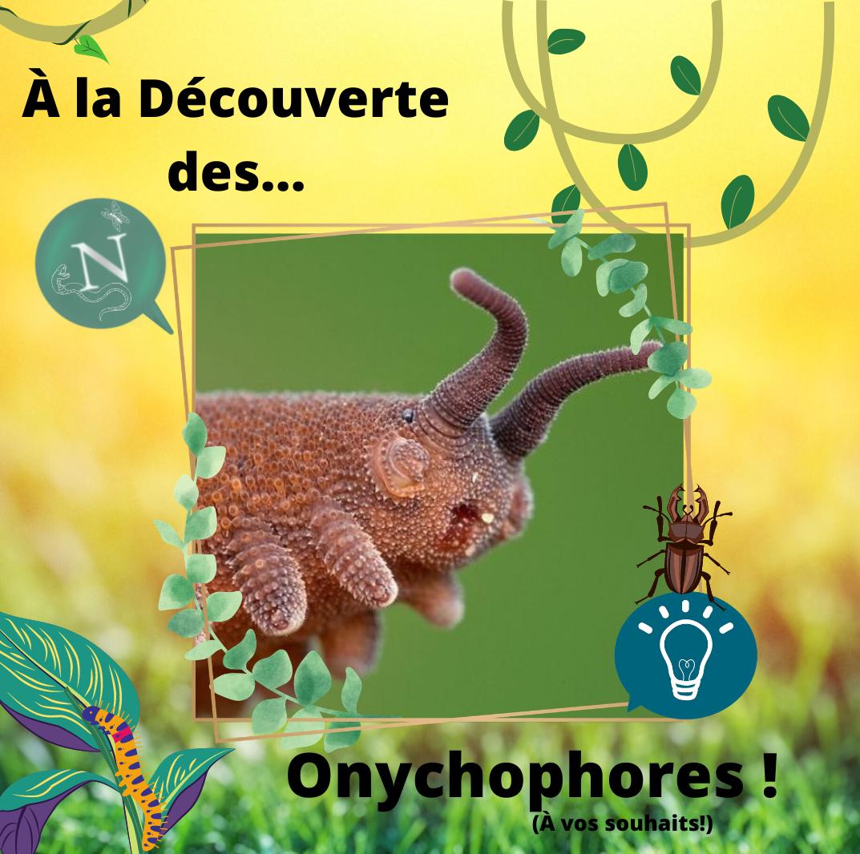 À la rencontre des…Onychophores (ou Péripates) !
