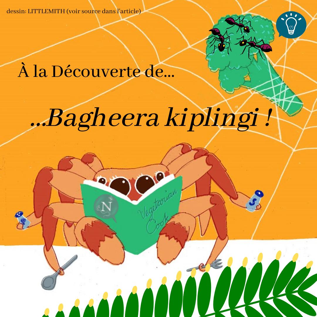 A la découverte de…Bagheera kiplingi