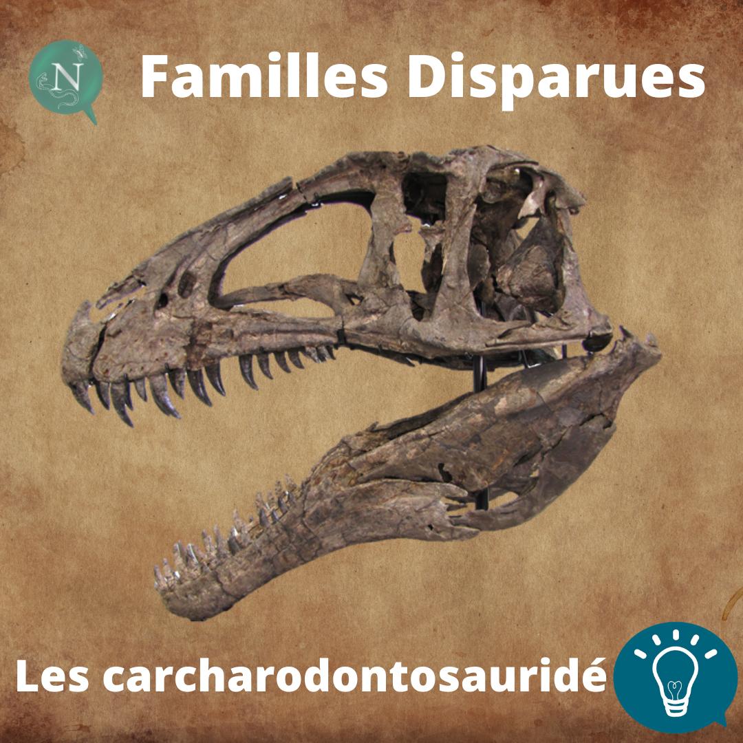 Familles Disparues, Épisode 1 : Les Carcharodontosauridés